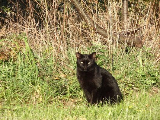 武庫川土手の黒猫