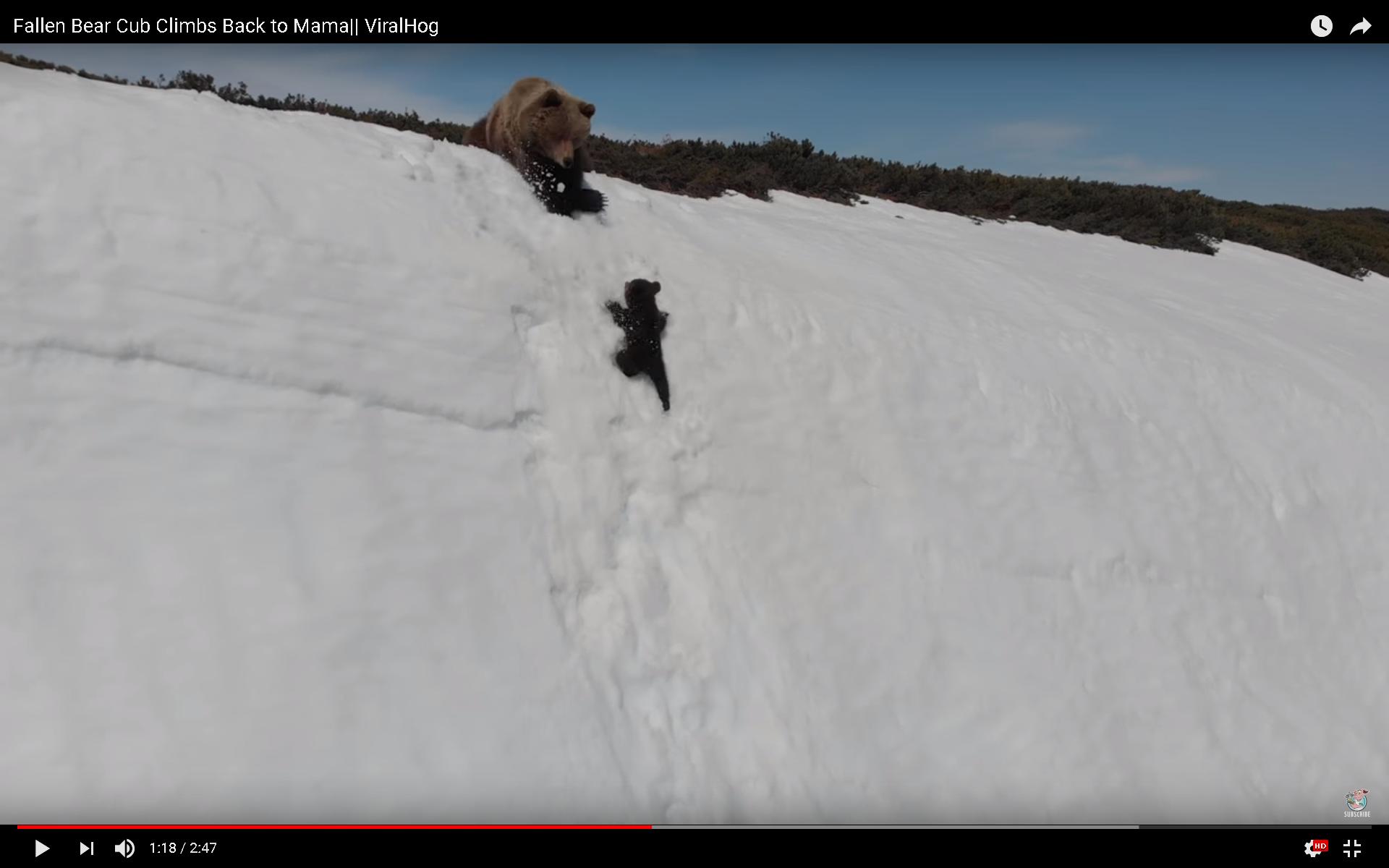 母熊と子熊